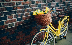 TULIPS, Flowers, bike