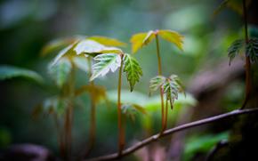 rama, deja, follaje, degradación, forma, Verde, Widescreen, Macro, hojas, fullscreen, papel pintado, fondo, Widescreen