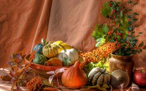vegetables, Pumpkin, vase, still life