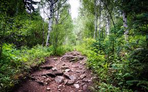 forêt, arbres, noyaux, nature