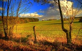 autunno, campo, steccato, alberi, HORIZON, paesaggio
