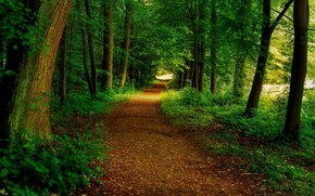 foresta, stradale, alberi, natura