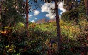 森林, 树, 山, 天空, 景观