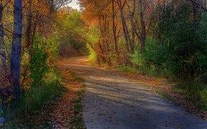 foresta, alberi, autunno, stradale, paesaggio