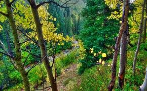 森林, 秋, 潆, 树, 景观