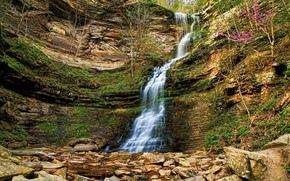 岩石, 瀑布, 石头, 树, 性质