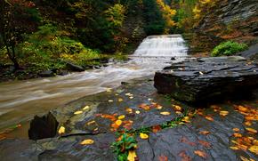 森林, 树, 岩石, 瀑布, 河, 秋, 性质