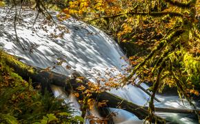 cascade, automne, arbres, nature