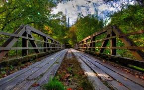 bridge, trees, landscape