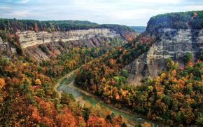 河, 果阿, 树, 秋, 从顶视图