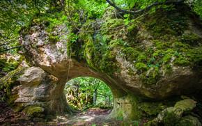 лес, скала, арка, природа