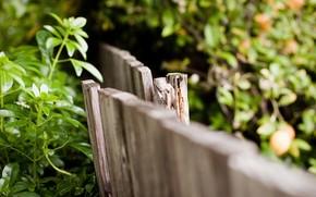 篱笆, 击剑, 宏, 背景, 壁纸, 叶子, 全屏, 叶子, 宽屏, 木, 宽屏
