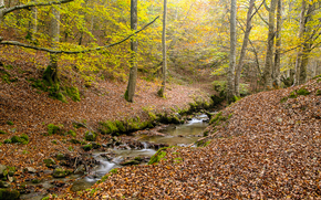 autumn, forest, river, trees, nature