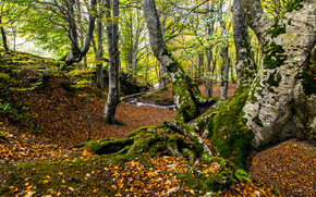 autumn, forest, trees, small river, nature