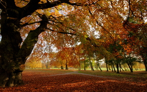 autumn, park, trees, landscape