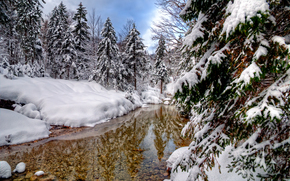 winter, forest, trees, pond, landscape