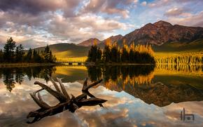 озеро, горы, лес, утро, Национальный парк Джаспер, Канада, коряга, свет, Альберта