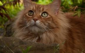 pietra, visualizzare, gatto