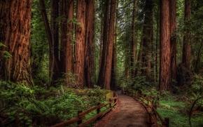 alberi, MacMillan Provincial Park, Canada, Pseudotsuga, British Columbia, foresta, Cathedral Grove, stradale