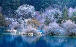 bay, carta da parati, gelo, fiume, alberi, PENDENZA, foresta, paesaggio, acqua, inverno