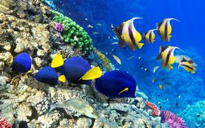 Tapete Unterwasser Blasen Fisch Versenden Korallen Zeichnen Auf