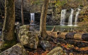 foresta, alberi, cascata, pietre, Rocce, natura
