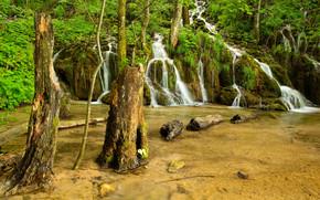 foresta, alberi, pond, cascata, natura