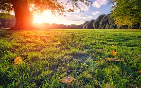 summer, tree, park, glade, Rays, sun