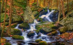 森林, 潆, 瀑布, 石头, 树, 秋, 性质