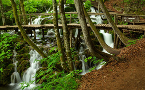forest, trees, waterfalls, bridge, stage, nature
