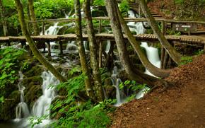 森林, 树, 瀑布, 桥, 舞台, 性质