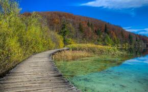 湖, 森林, 树, 桥, 景观