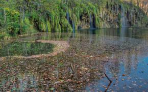 池塘, 岸, 瀑布, 树, 性质
