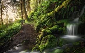 森林, 树, 瀑布, 性质