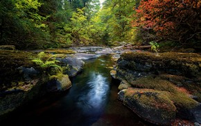 foresta, alberi, pietre, piccolo fiume, natura