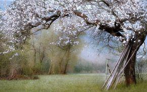 PRIMAVERA, paesaggio, giardino, natura