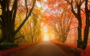 forest, fog, park, autumn, road