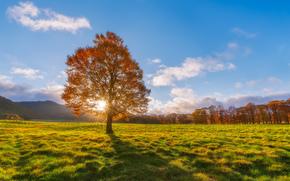 sol, outono, Rays, campo, árvore
