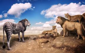 удивление, львы, встреча