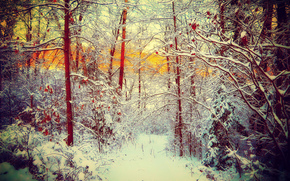 trees, snow, winter, forest