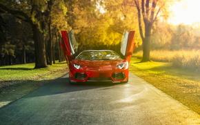 Lamborghini, avtooboi, Lambo, Lamborghini