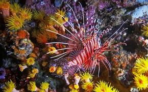 Mondo subacqueo, piccoli pesci, Coralli