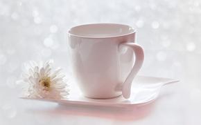 fiore, tazza, crisantemo, piattino, abbagliamento