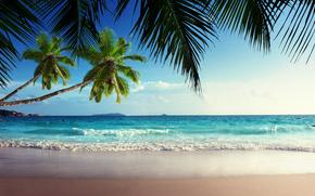 ocean, sand, shore, tropics, sea, sky, sun, Palms, beach
