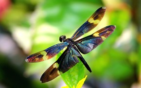 insect, Wings, dragonfly, wings