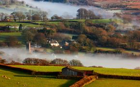 nature, morning, winter, Britain, fog