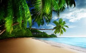 sun, beach, Palms, tropics, shore, sky, ocean, sea, sand