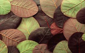 лист, природа, цвет, осень, листья