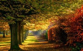 природа, парк, листья, лес, деревья, осень, дорога