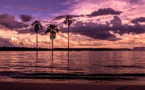 пальмы, залив, пляж, закат